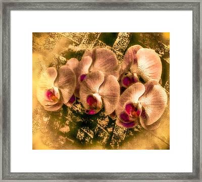 Late Summer Orchids Framed Print by Jill Balsam