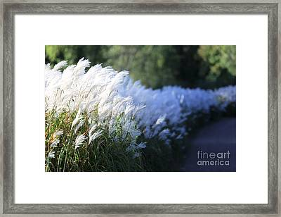 Late Summer Path Framed Print