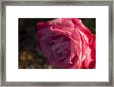 Late Fall  Surprise Framed Print