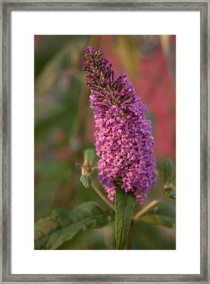 Late Summer Wildflowers Framed Print