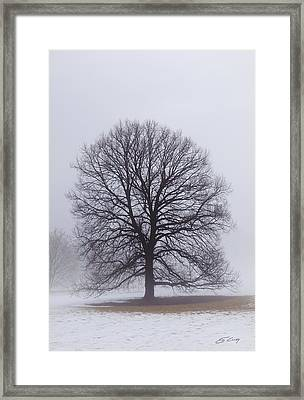 Late Winter Fog Framed Print by Ed Cilley