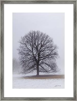 Late Winter Fog Framed Print