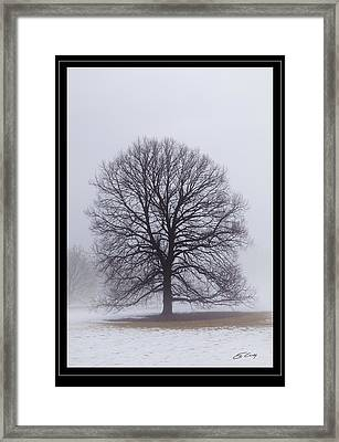 Late Winter Fog   Framed Framed Print by Ed Cilley