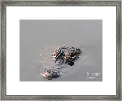 Later Gator Framed Print by Joseph Williams