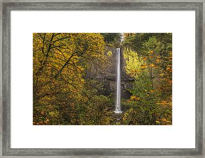 Latourell Through The Trees Framed Print