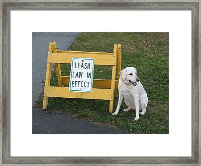 Laughing At Rules Framed Print