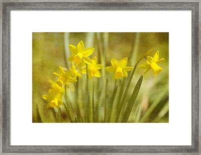 Laughing Dafs Framed Print