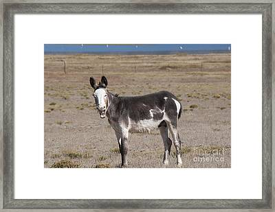 Laughing Donkey Framed Print