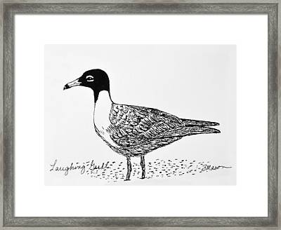 Laughing Gull Framed Print by Becky Mason