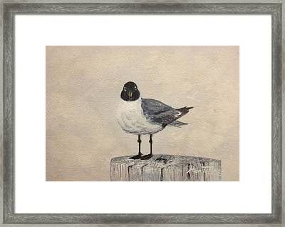Framed Print featuring the painting Laughing Gull by Stan Tenney