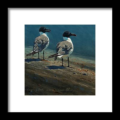 Gulls Framed Prints