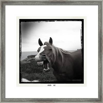 Laughing Horse Framed Print by Tracy Munson