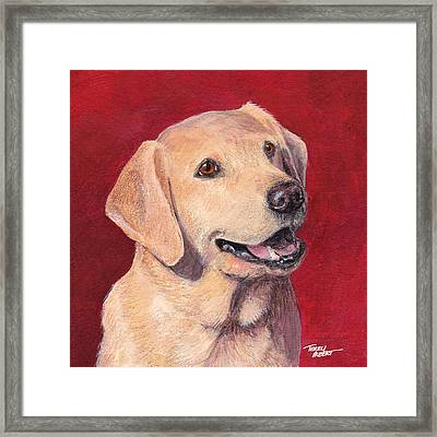 Laughing Labrador Framed Print