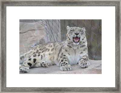 Laughing Framed Print by Michelle Hoffmann