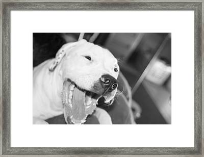 Laughing Pitty Framed Print