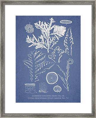 Laurencia Concinna And Hypnea Musciformis Framed Print by Aged Pixel