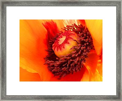 Lava Flow Framed Print by Connie Handscomb