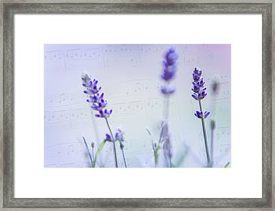 Lavender Blues Framed Print