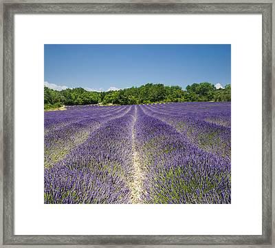 Framed Print featuring the photograph Lavander Field by Antonio Jorge Nunes