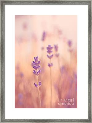 Lavandines 02 - S09a Framed Print by Variance Collections