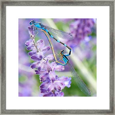 Lavendar And Dragonflies Framed Print by Carol Toepke