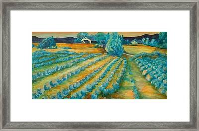 Lavendar Fields Framed Print by Bianca Romani