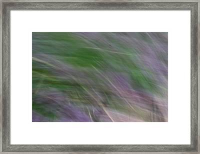 Lavendar Fields Framed Print
