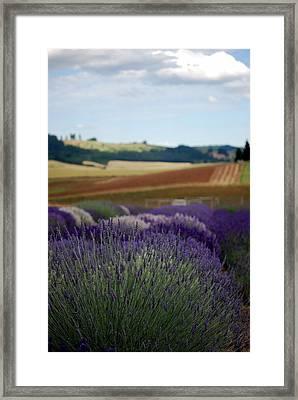 Lavendar Fields Forever Framed Print by Mamie Gunning