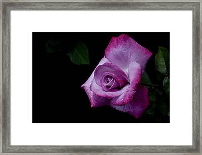 Framed Print featuring the photograph Lavendar Lady by Doug Norkum