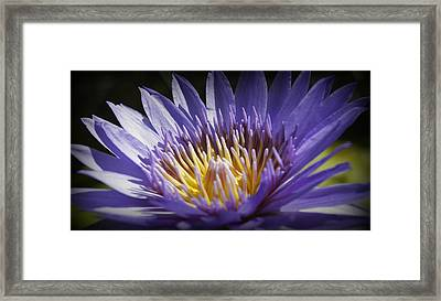 Framed Print featuring the photograph Lavendar Lily by Laurie Perry