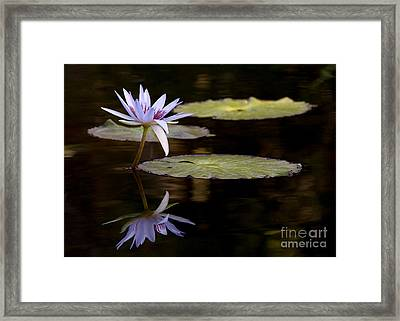 Lavendar Reflections In The Lake Framed Print by Sabrina L Ryan