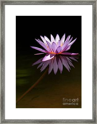 Lavendar Reflections Framed Print