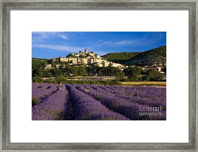 Lavender And Banon Framed Print by Brian Jannsen