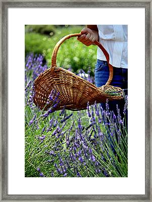 Lavender And Basket Framed Print
