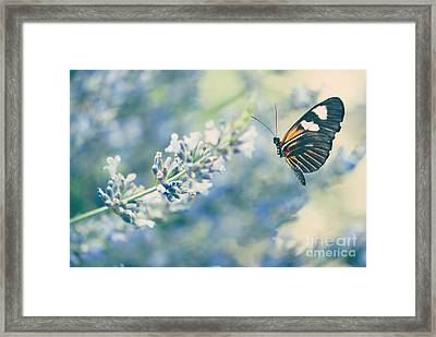 Lavender And The Butterfly Framed Print by Juli Scalzi