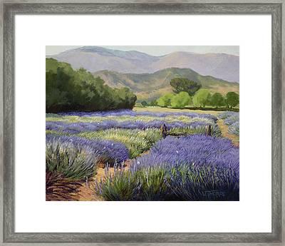 Lavender Blue Framed Print by Jane Thorpe