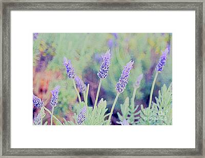 Lavender Framed Print by Cassandra Buckley