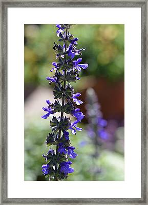Lavender Dance - Floral Photography By Sharon Cummings Framed Print by Sharon Cummings