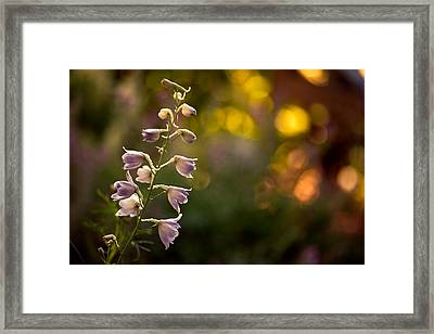Lavender Delphinium Framed Print by Bonnie Bruno