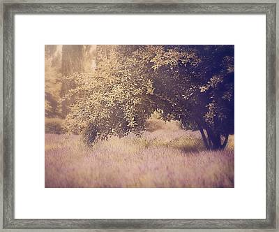Lavender Dreams Framed Print by Amy Weiss