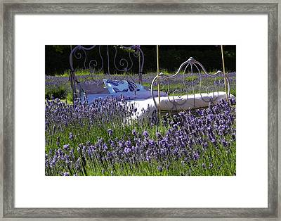 Lavender Dreams Framed Print by Cheryl Hoyle