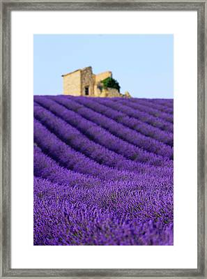 Lavender Field At Sunset Framed Print by Republica