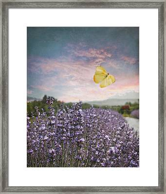 Lavender Field Pink And Blue Sunset And Yellow Butterfly Framed Print