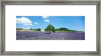 Lavender Field Provence France Framed Print
