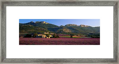 Lavender Fields And Farms, High Framed Print by Panoramic Images