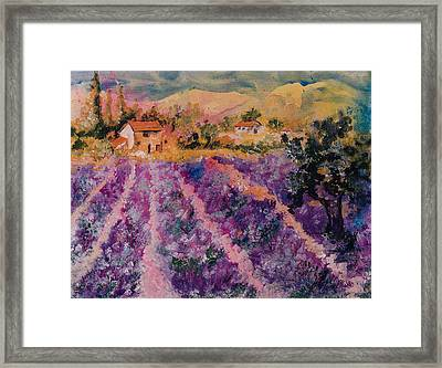 Lavender Fields In Provence Framed Print