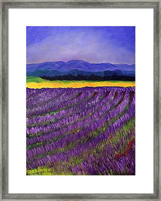 Lavender Fields Framed Print