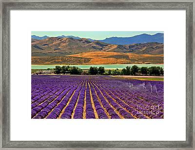 Lavender Fields Framed Print by Leslie Kirk
