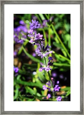 Lavender Flowers Framed Print by Michelle Wiarda