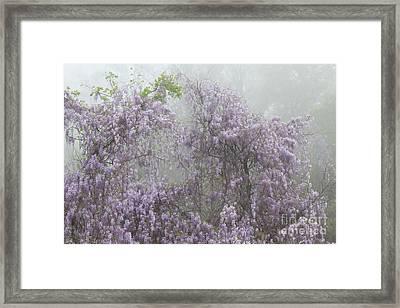 Lavender Fog Framed Print
